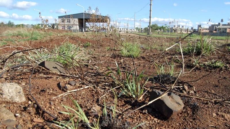 """Adela Veliz: """"Hacia fines de agosto la sequía se había intensificado en el norte y el centro de la Mesopotamia y en el este de la Región Chaqueña""""."""