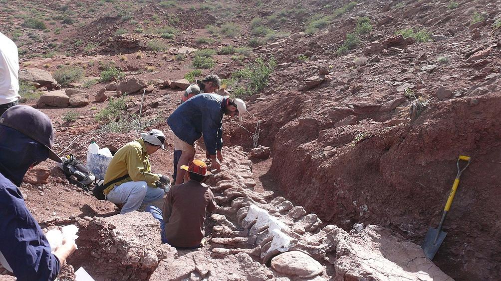 """Los materiales hallados se encuentran alojados en el Museo de Ciencias Naturales """"Prof Dr. Juan Olsacher""""."""