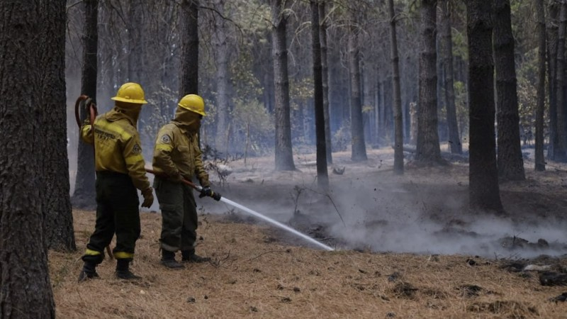 Los incendios forestales en la comarca andina provocaron pérdidas millonarias (foto archivo)