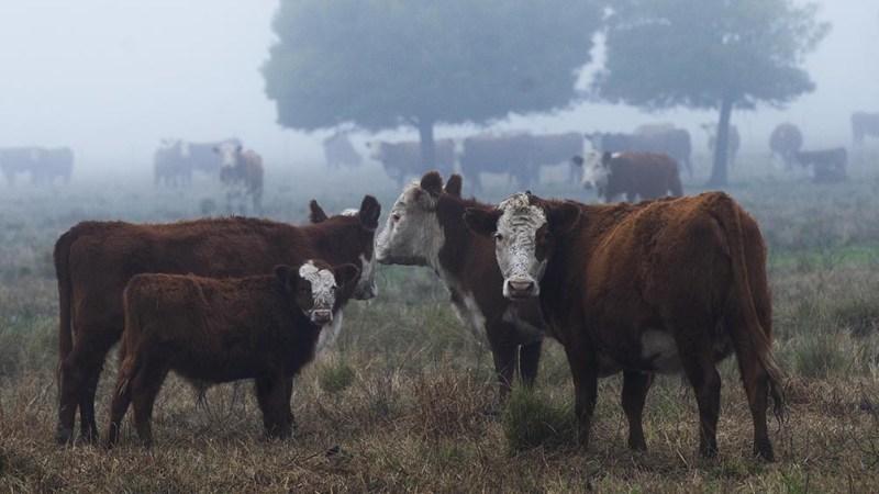 El Presidente convocó a todos los sectores de la cadena de producción de carne.