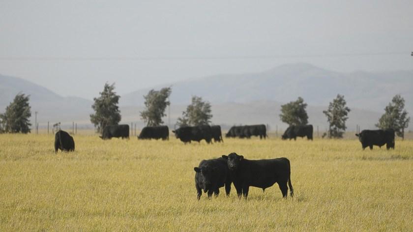 Kulfas anunció también que se reactivará un acuerdo con frigoríficos para vender carne a precios populares.