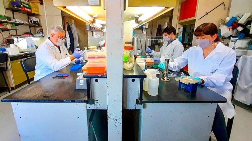 Investigadores del CONICET en el Laboratorio de Terapia Molecular y Celular del Instituto Leloir que desarrolla la vacuna CoroVaxG.3.