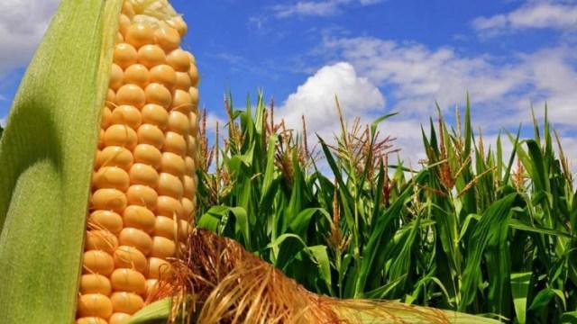Desde principios de año la soja y el maíz acumulan subas de más de US$ 100.