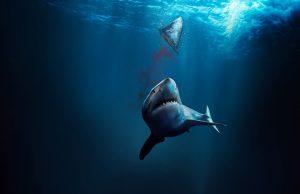 Fin-la-mattanza-degli-squali-discovery