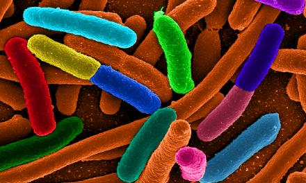 Il segreto della longevità? E' tutto nell'intestino. Lo studio di Università di Bologna e Cnr è il primo al mondo che mette in relazione longevità e 'microbiota' intestinale