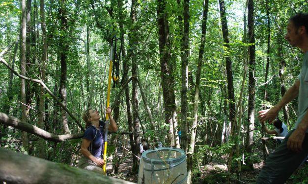 Biodiversità e risorse economiche, binomio inscindibile. Intervista al prof. Filippo Bussotti dell'Università di Firenze