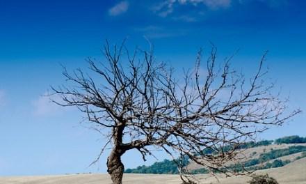 Siccità: le conseguenze per vegetazione e agricoltura in Toscana tra maggio e giugno
