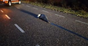 Haringvliet police remove seal on road |  Internal