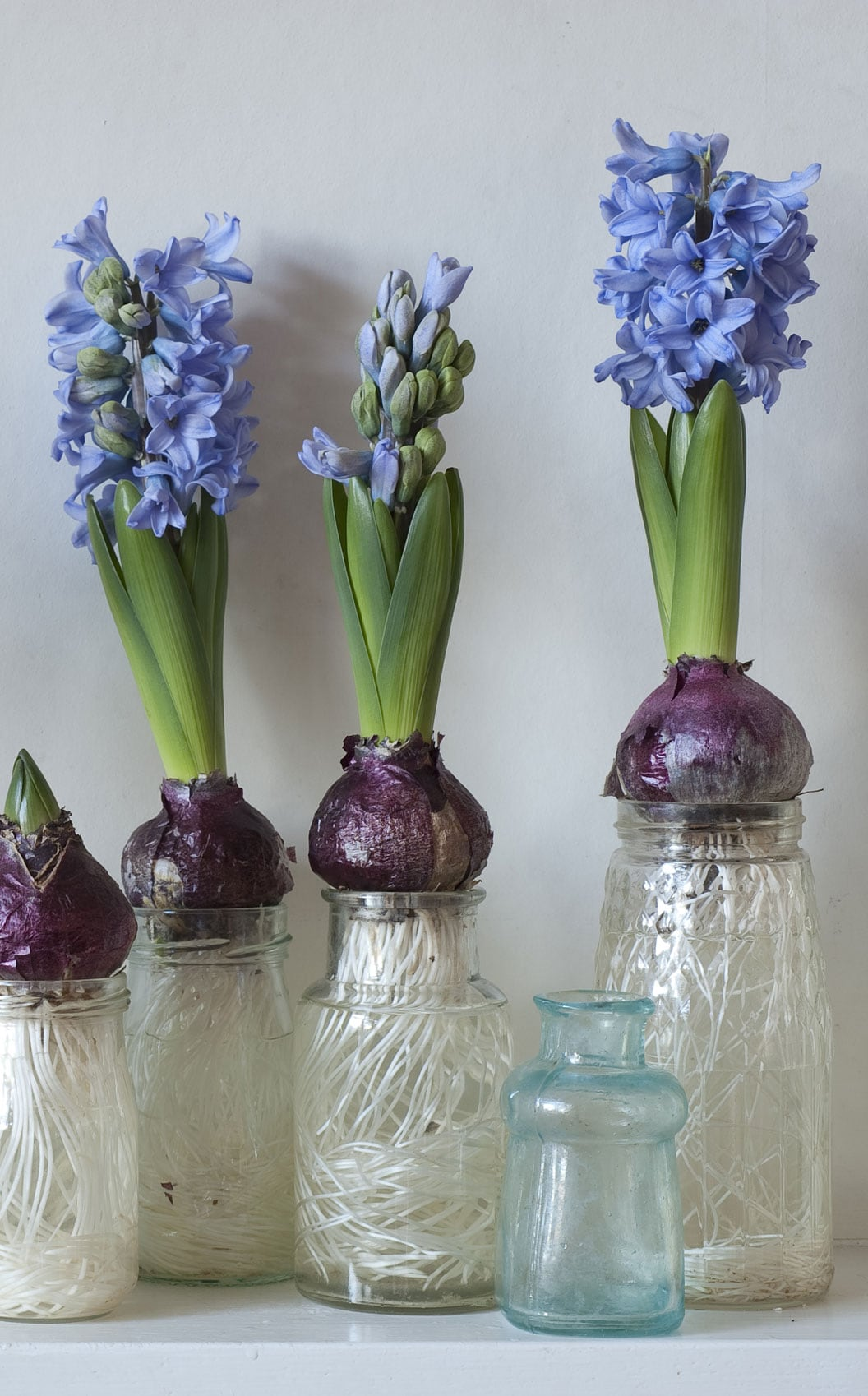 Hyacinths In Jars Projects For A Winter Garden Gardening