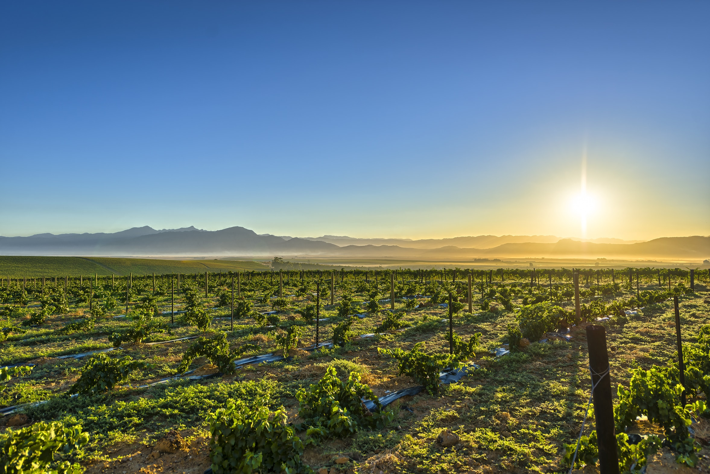Wine tours are a great option for visitors to Cape Town