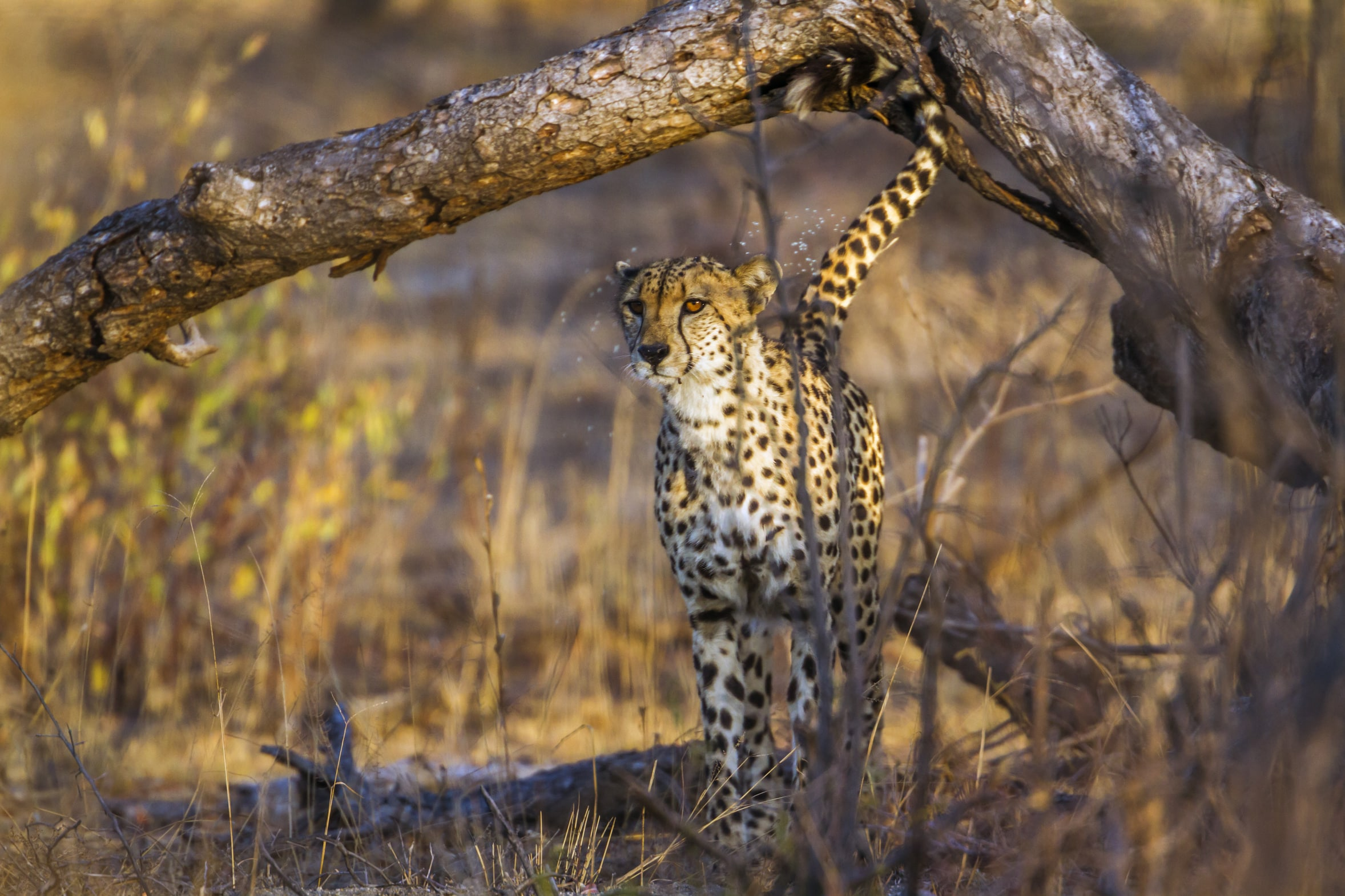 Wildlife is one of South Africa's main draws