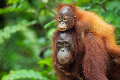 Borneo: Is this the world's greatest island for animal lovers?