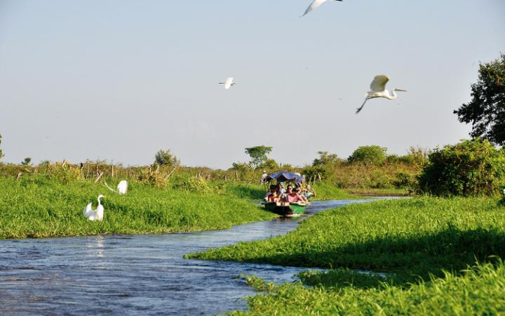 On the backwaters of the Magdalena