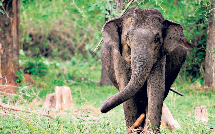 Indias Western Ghats A Wealth Of Wildlife And The Worlds Best Pharmacy Telegraph