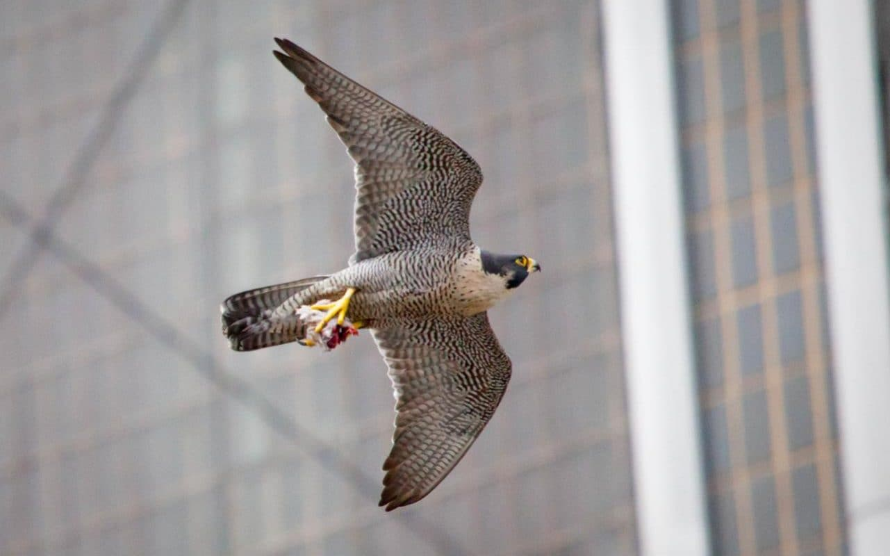 Image result for bird of prey above city traffic