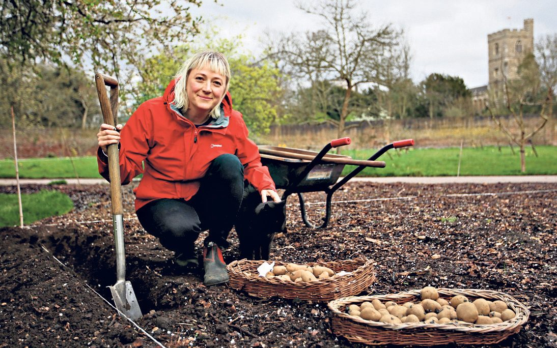 Lucy Hart sowing seed potatoes in March