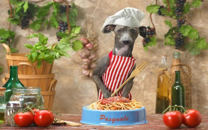 A dog wearing a chefs hat and apron and cooking pasta