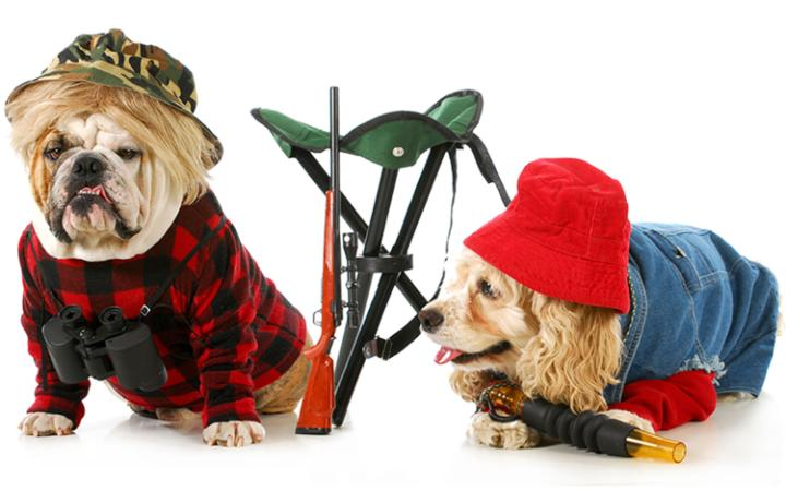 Two dogs in hunting costumes with toy guns
