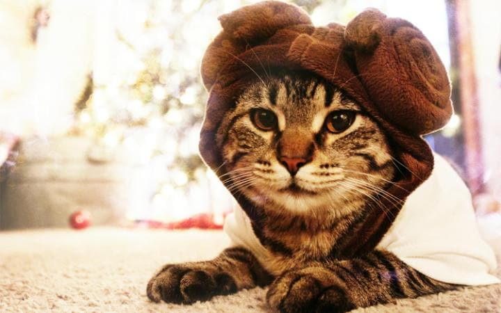 A cat dressed up as Princess Leia from Star Wars