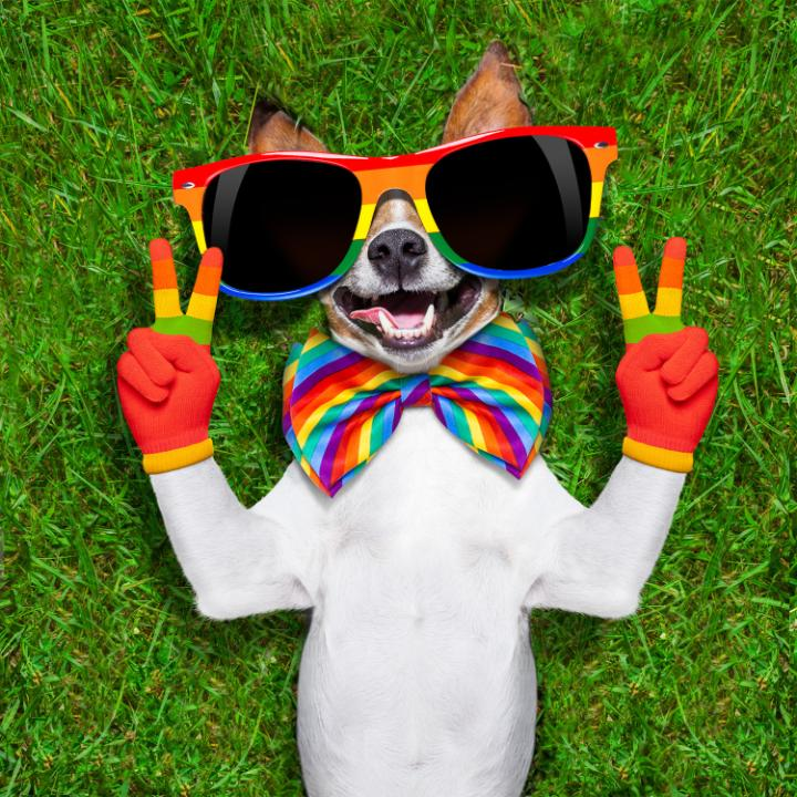 A dog wearing rainbow-coloured sunglasses, bow tie and gloves