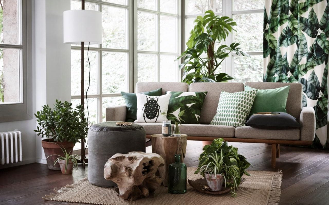 Green Revolution How The Houseplant Became Hip Again