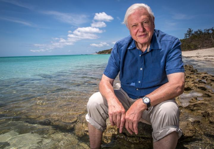 """Sir David Attenborough has warned of the """"grave"""" dangers facing the Great Barrier Reef"""