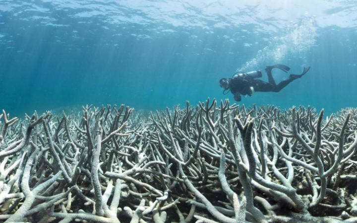 An estimated 22 per cent of the reef was destroyed during the 2016 coral bleaching event