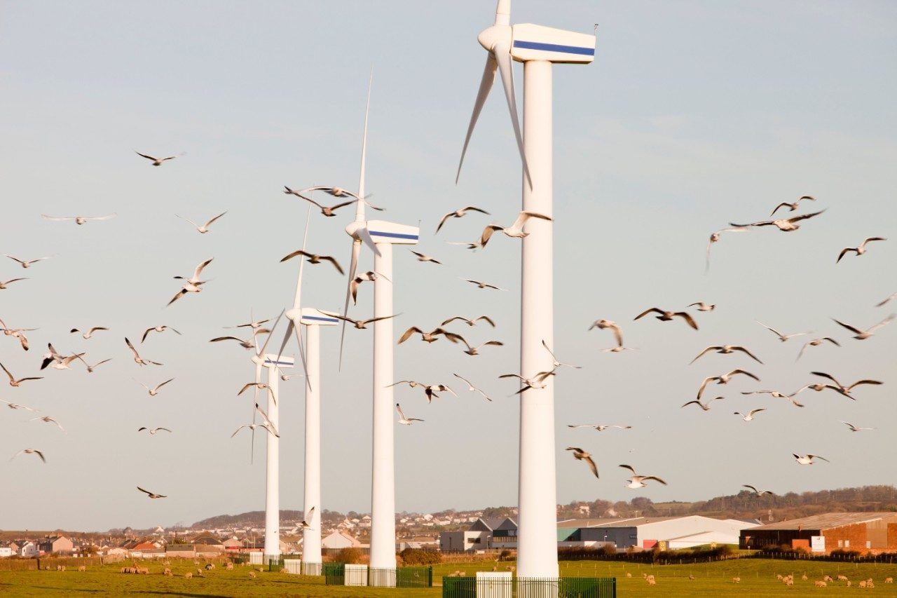 A flock of gulls flies through a row of wind turbines in Cumbria