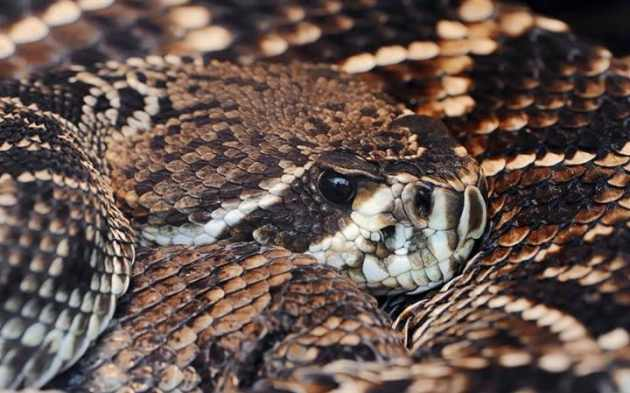 Image result for Florida man tries to kiss rattlesnake; gets bitten