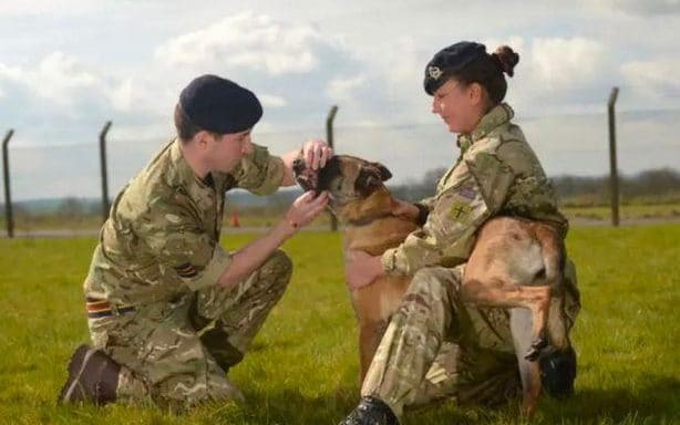 Hero army dogs saved from death row after minister intervenes