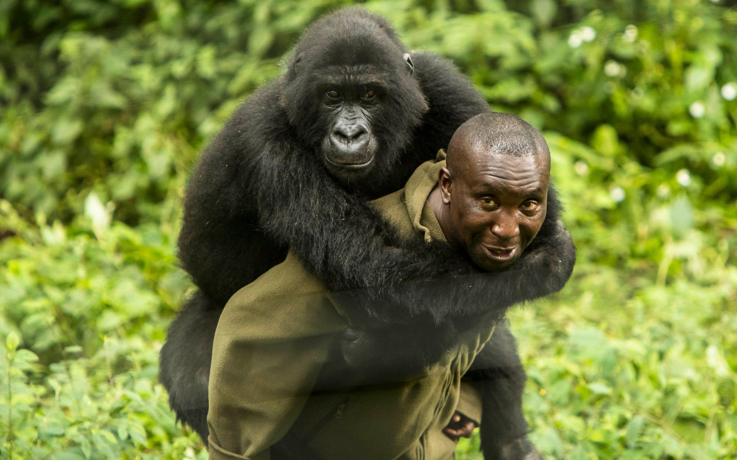 Leonardo DiCaprio creó el Fondo Virunga para proteger una reserva ...