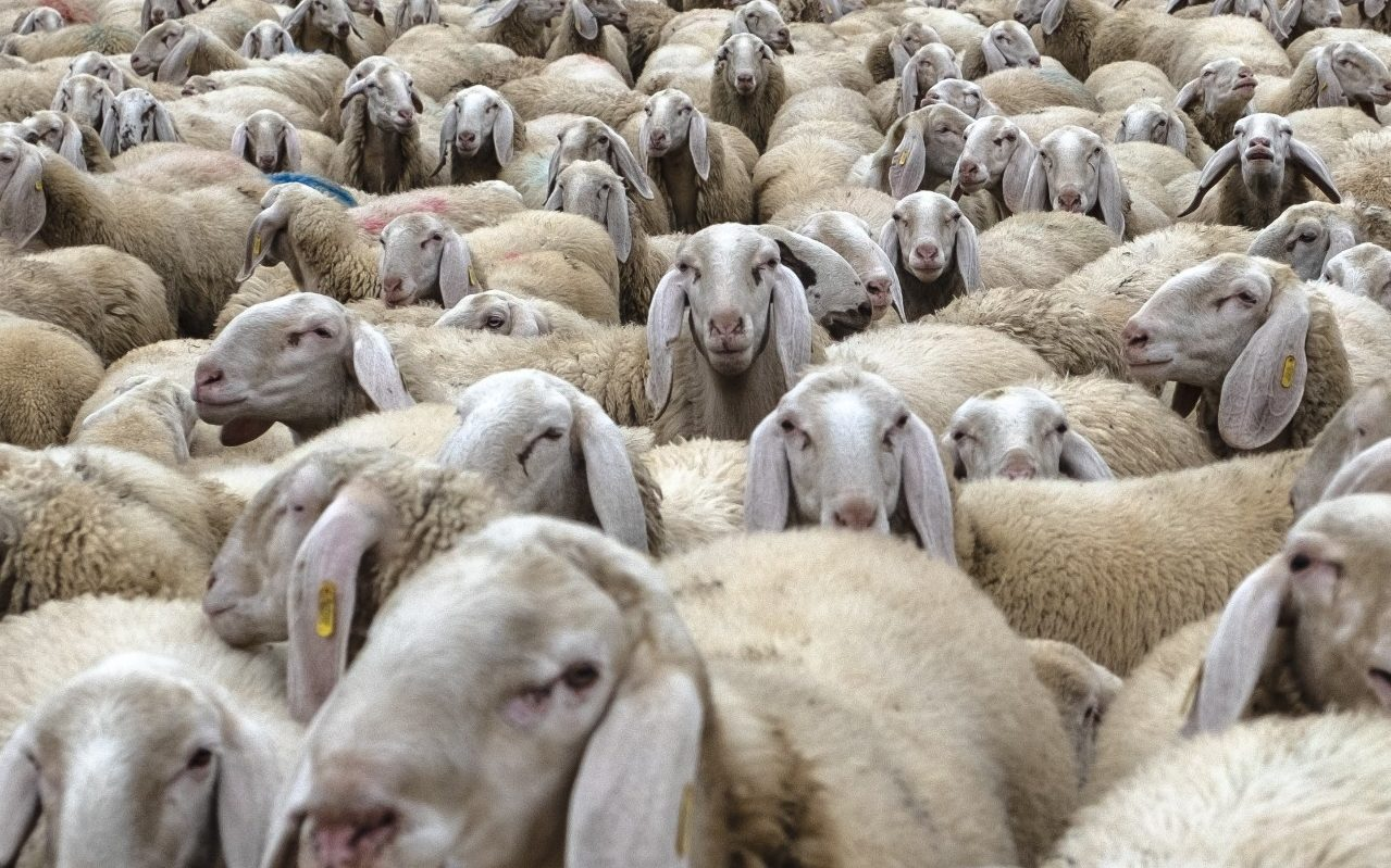 Rome S Neglected Parks And Gardens Send In Sheep And