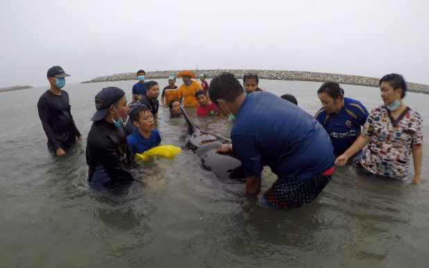 Volunteers and vets attempt to rescue the sick whale