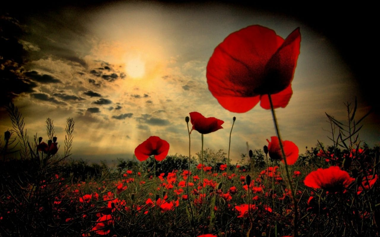 Remembrance Sunday 2019: Poppies, Armistice and why the act of remembrance matters