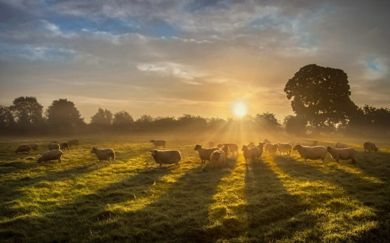 Farmers fear tree planting ambitions will lead to rural 'depopulation'