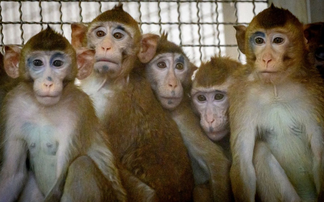 Marauding monkeys attack lab technician and steal Covid-19 tests