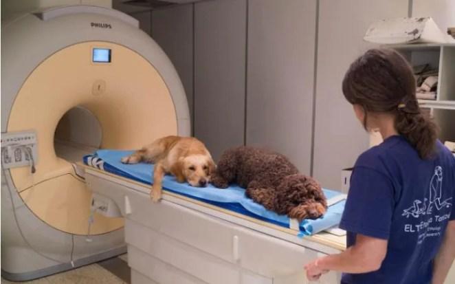 Dogs lie on an MRI scanner