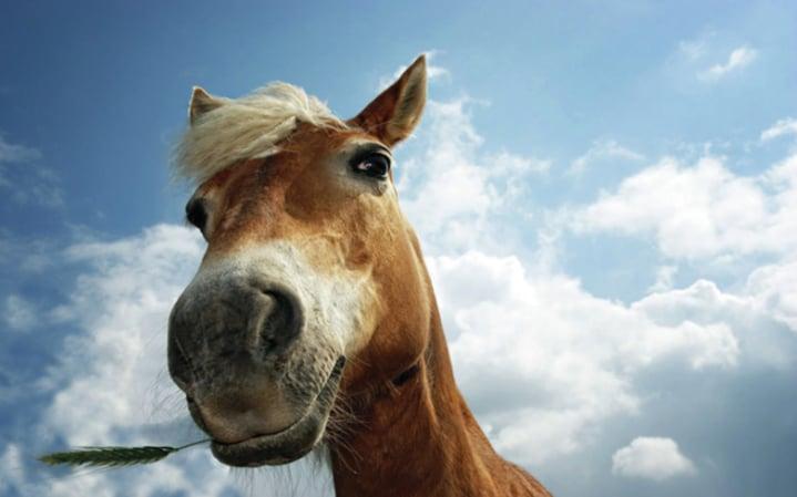 A modern horse