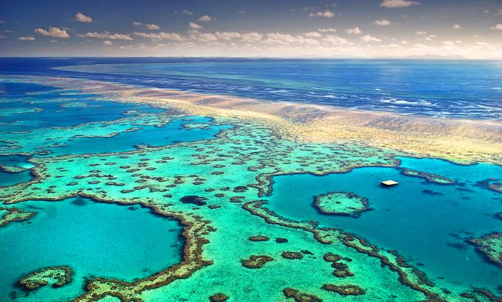 The Great Barrier Reef is still reeling from the biggest mass bleaching event in history