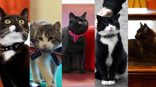 Downing Street Cats All The Essential Information About