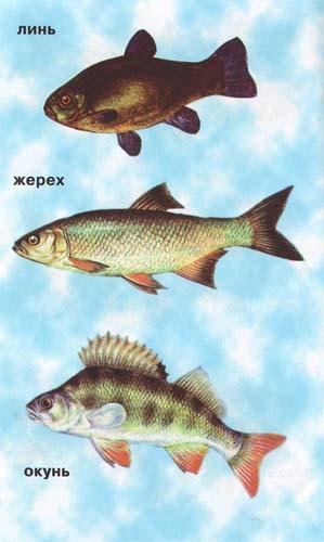 Рыб Фото С Названиями