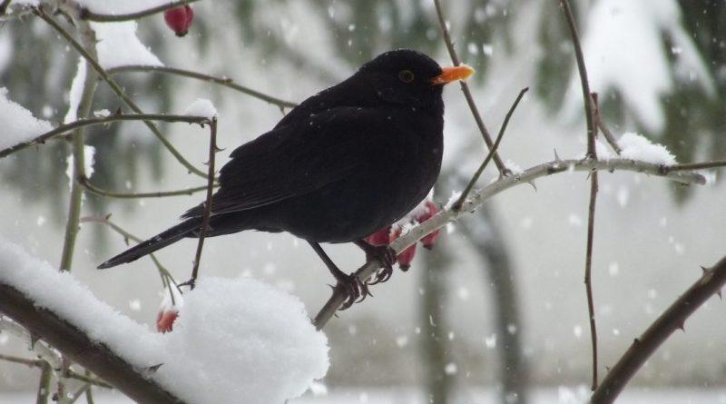 Jó, ha télen etetjük a madarakat, de nem mindegy, hogy mit teszünk az etetőbe. Fotó: Sáfrány Szilvia