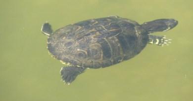 Figyeljünk a teknősökre!