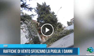 alberi muri abbattuti