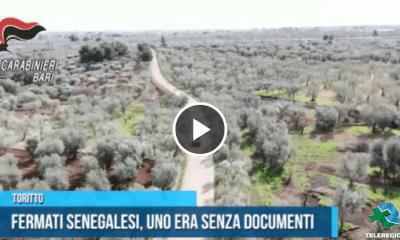 QUASANO SENEGALESI