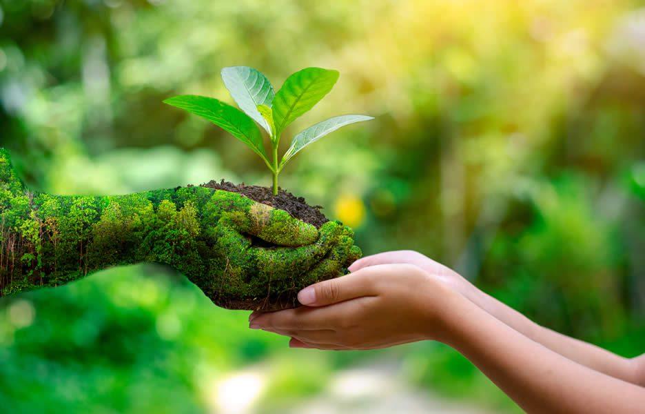 Mão árvore oferece muda de esperança à mão de criança - Crédito: Freepik