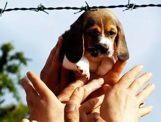Green Hill, le condanne per maltrattamenti sugli animali