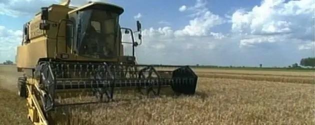 Alle stelle i prezzi di mais e soia
