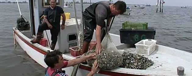Pesca vongole: chiesta la proroga