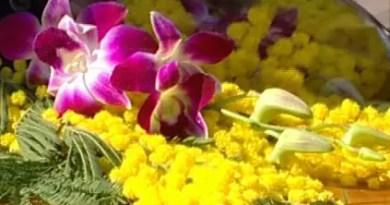 fiori festa donna mimos